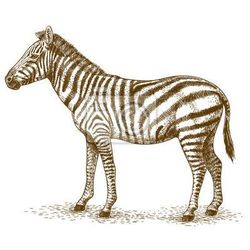 Plakat Ilustracja zebra grawerowania