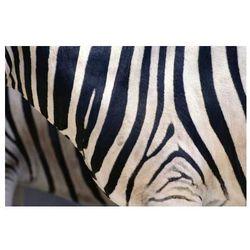 Fototapeta 04X Zebra 3357