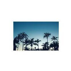 Foto naklejka samoprzylepna 100 x 100 cm - Kokosowe palmy widok perspektywiczny