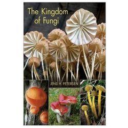 The Kingdom of Fungi