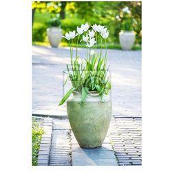 Fototapeta białe tulipany kwiaty w wazonie ceramicznych dekorowanie miasta ogrodu