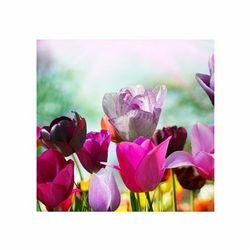Piękne wiosenne kwiaty - reprodukcja