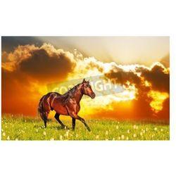 Fototapeta pomija zatoki konia na łące na tle zachodu słońca