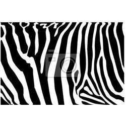 Fototapeta vector - zebra texture Black and White