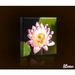 Lilia wodna BASIC Obraz LED kwadratowy