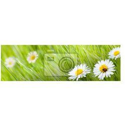 Naklejka stokrotka i trawa zielona z biedronki iwstępnego
