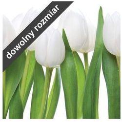 fototapeta białe tulipany 04