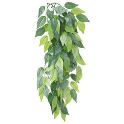 Roślina do terrarium Rozmiar:o 20 × 50 cm