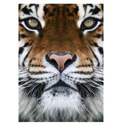 Tygrys - fototapeta