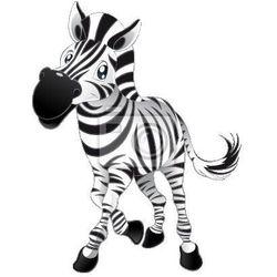 Fototapeta Dziecko Zebra