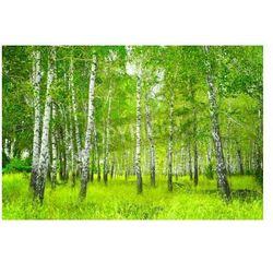 Fototapeta Piękny krajobraz - Lato Birchwood