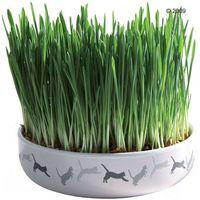 Miska ceramiczna z trawą - Ø 15 x 4 cm + 50 g nasion trawy