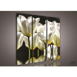 Obraz Białe Tulipany PS585S6