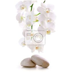 Fototapeta Masaż kamienie z storczyków.