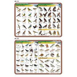 Podkładka edukacykna Ptaki: wodne, śpiewające, drapieżne; ryby