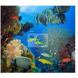 Naklejka Koralowców i ryb